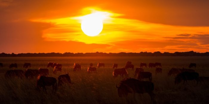 west zambia liuwa plains wildlife photography wildlife sunset