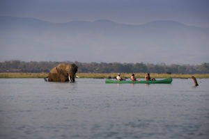 zambezi expeditions mana pools canoe elephant