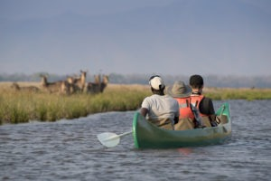 zambezi expeditions mana pools canoe waterbuck