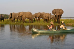 zambia lower zambezi sausage tree camp boating safari