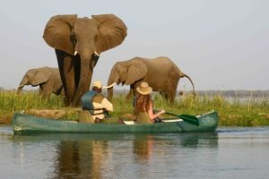 zambia lower zambezi sausage tree camp canoe elepahnt wildlife boating safari