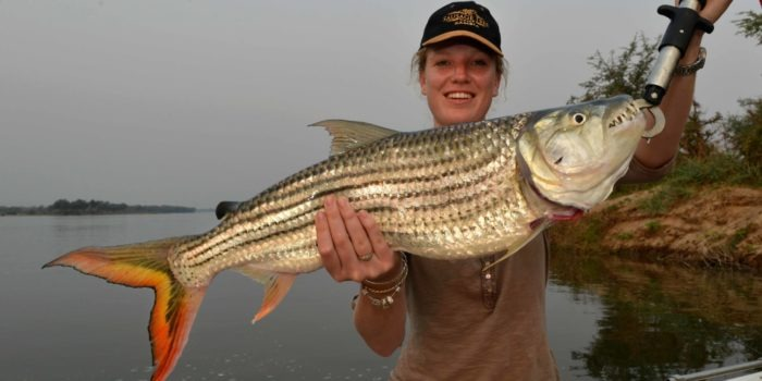 zambia lower zambezi sausage tree camp tiger fishing river