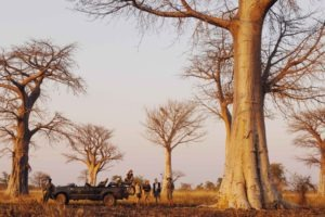 zambia luangwa valley baobab game drive