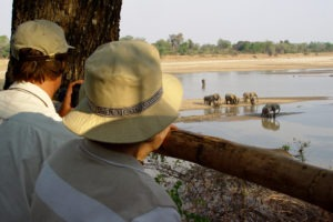 zambia luangwa valley elephants hide photography
