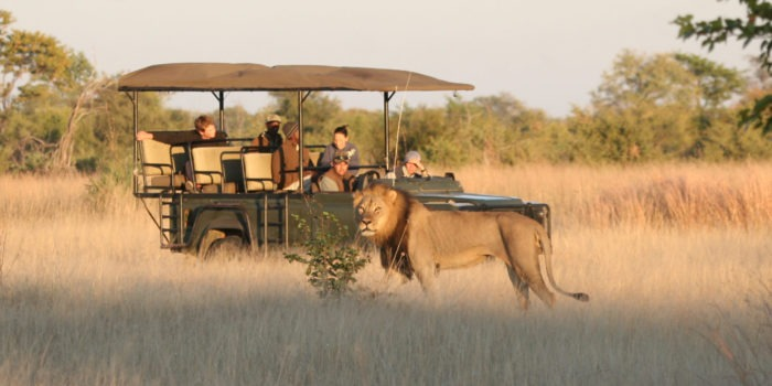 zimbabwe hwange lion game drive safari big five