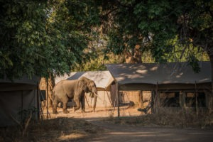 zimbabwe mana pools elephant camp mobile safari