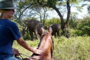 zimbabwe victoria falls horse riding adventure tour