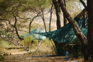 banagi green camp tanzania tents
