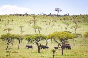 tanzania safaris elephants vast