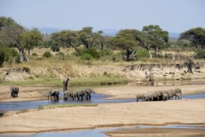 sand rivers selous elephants