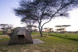 wayo walking camp serengeti tent view