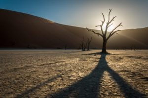 Deadvlei Tree silhouette 1