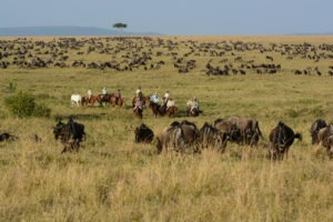 Horse Safari Miles of wildebeest
