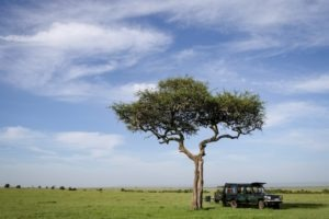 Masai Mara Kenya tree breakfast plain