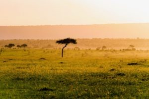 Masai Mara Kenya tree plain sunset