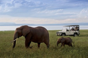 bumi hills safari lodge game drives