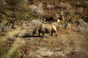 Damaraland Rhino Tracking