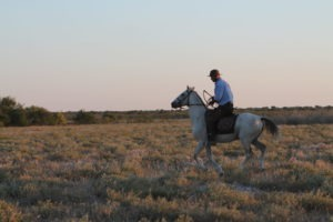 Kalahari Horse Safari Guide