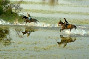 galopp in water okavango horse safari