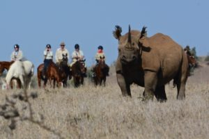 Horse Safari Viewing Black Rhino