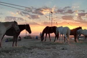 Sunset with horses