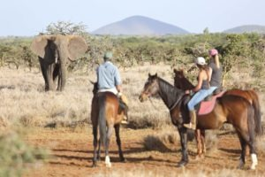 Lewa Wilderness Elephant and Riding