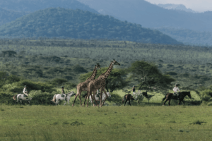 Ol Donyo Horse Riding and Giraffes