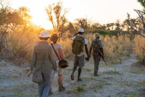 walking safari botswana wild expedition safaris