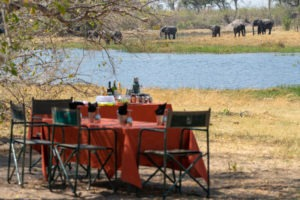 wild expedition safaris botswana lunch elephants