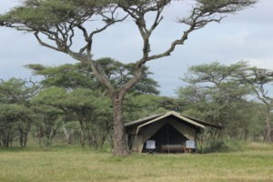 ndutu wilderness camp tanzania camp day