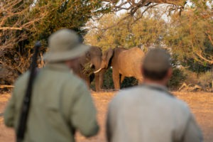 walking safari gonarezhou guests elephants zimbabwe