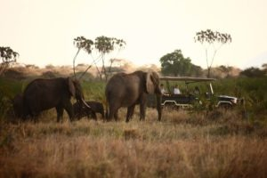 Elsas Kopje activities game drive elephant 5