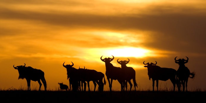 Ubuntu Migration camp sunset animals serengeti