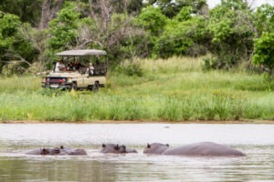 botswana okavango delta camp moremi hippos gameviewer