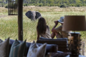 botswana okavango delta sable alley lounge elephant