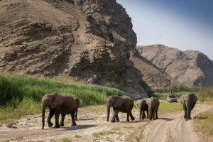 15Hoanib Valley Camp Elephants in river bed