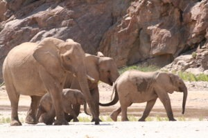 Namibia Kaokoland Okahirongo Elephant Lodge activties17