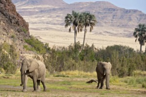 Namibia Kaokoland Okahirongo Elephant Lodge activties43
