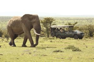 encounter mara game drive