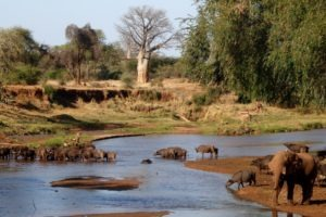 south africa kruger national park makuleke shangani walking safaris 9