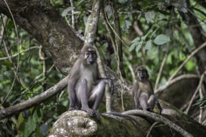 republic of congo odzala wildlife safaris experiences 15