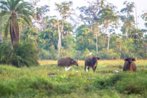 republic of congo odzala wildlife safaris experiences 20