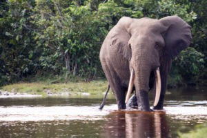 republic of congo odzala wildlife safaris experiences 21