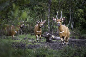 republic of congo odzala wildlife safaris experiences 5