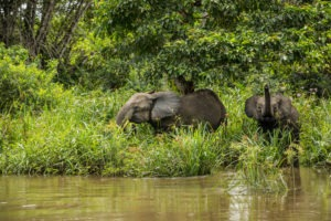 republic of congo odzala wildlife safaris experiences 9