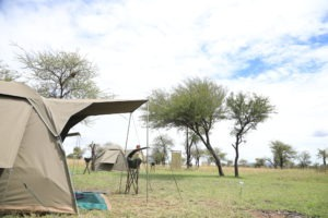 tanzania serengeti great migration camps safaris 19