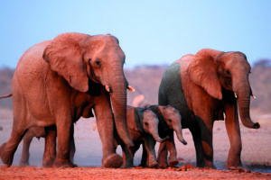 namibia safaris affordable tours sense of africa set departures 26