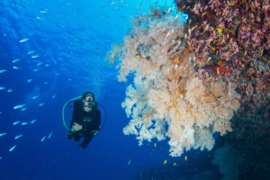 Seychelles outer islands diving1