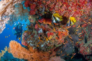 Seychelles outer islands diving2
