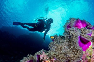 Seychelles outer islands diving3